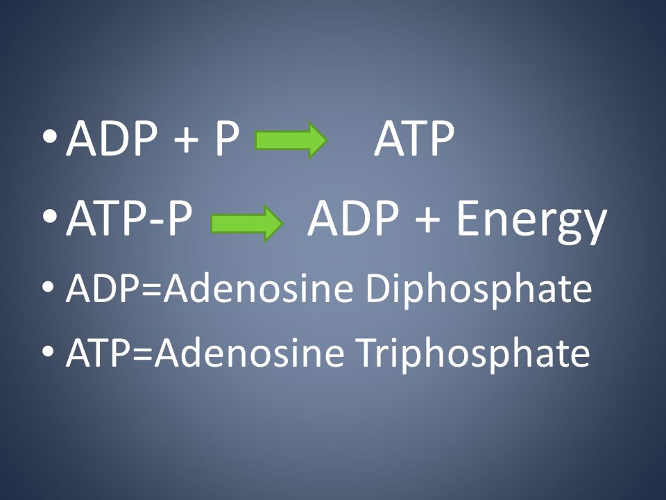 ADP + PATP ATP-PADP + Energy ADP=Adenosine Diphosphate ATP=Adenosine Triphosphate