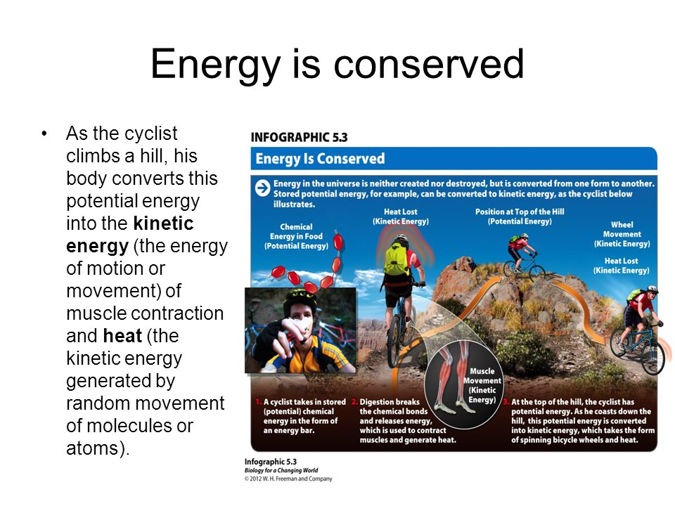Energy is conserved As the cyclist climbs a hill, his body converts this potential energy into the kinetic energy (the energy of motion or movement) of muscle contraction and heat (the kinetic energy generated by random movement of molecules or atoms).
