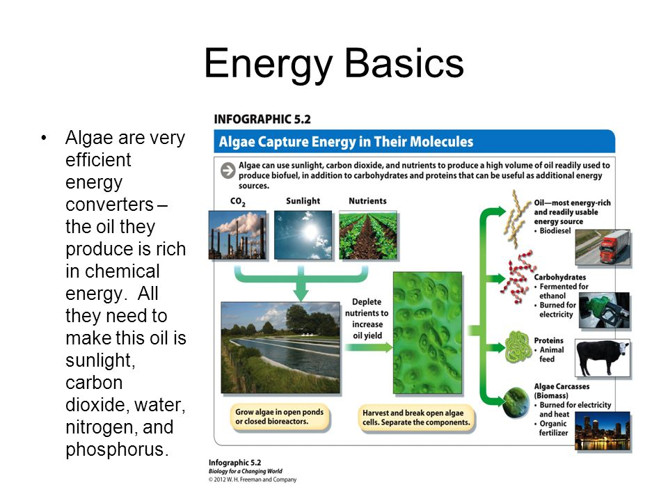 Capturing energy: Photosynthesis The process of photosynthesis can be summarized in the following equation: Sunlight + Water + Carbon dioxide  Oxygen + Glucose