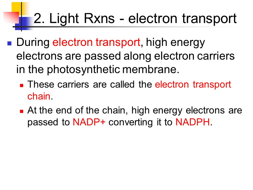 2. Light Rxns - electron transport During electron transport, high energy electrons are passed along electron carriers in the photosynthetic membrane.