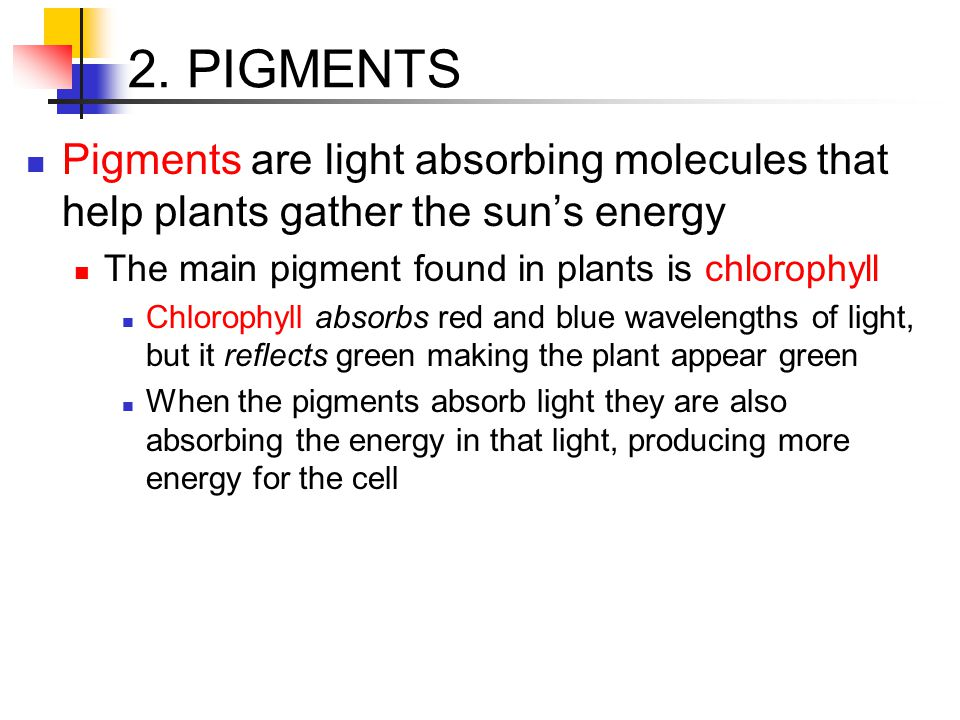 2. PIGMENTS Pigments are light absorbing molecules that help plants gather the sun's energy The main pigment found in plants is chlorophyll Chlorophyl