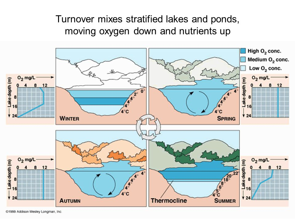 Turnover mixes stratified lakes and ponds, moving oxygen down and nutrients up