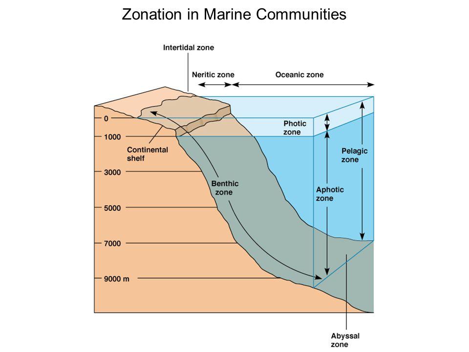 Zonation in Marine Communities