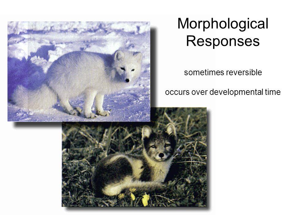 Morphological Responses sometimes reversible occurs over developmental time