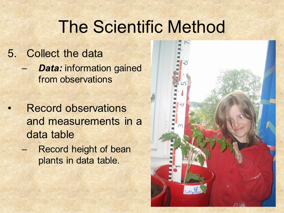 The Scientific Method 5.Collect the data –Data: information gained from observations Record observations and measurements in a data table –Record height of bean plants in data table.