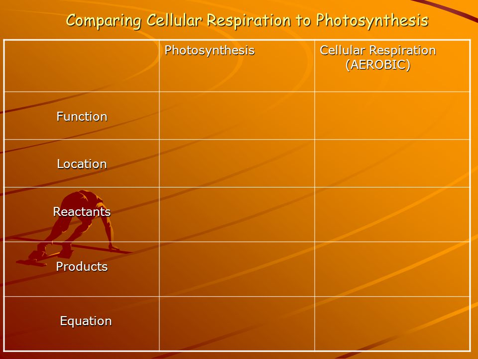Comparing Cellular Respiration to Photosynthesis Photosynthesis Cellular Respiration (AEROBIC) (AEROBIC) Function Location Reactants Products Equation