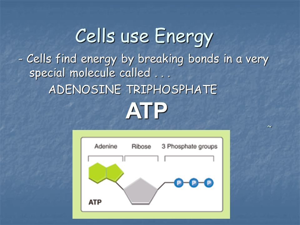 Cells use Energy - Cells find energy by breaking bonds in a very special molecule called... ADENOSINE TRIPHOSPHATE ATP ~