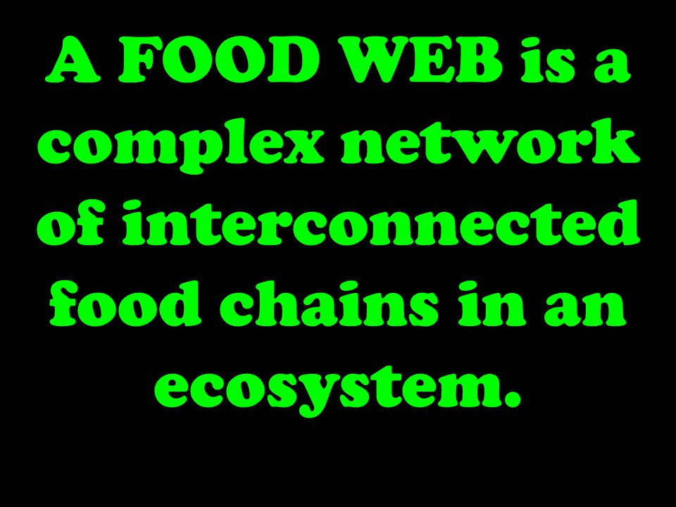 A FOOD WEB is a complex network of interconnected food chains in an ecosystem.