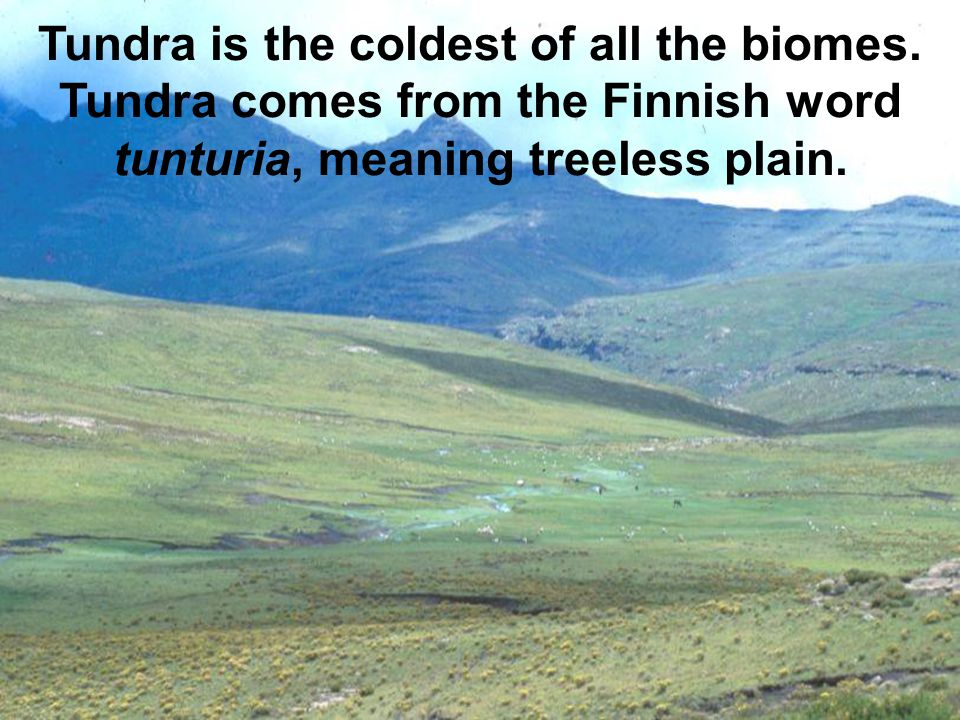 Tundra is the coldest of all the biomes.