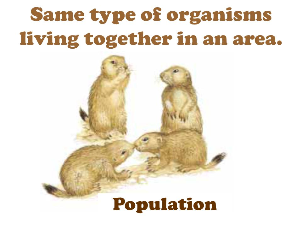 Same type of organisms living together in an area. Population