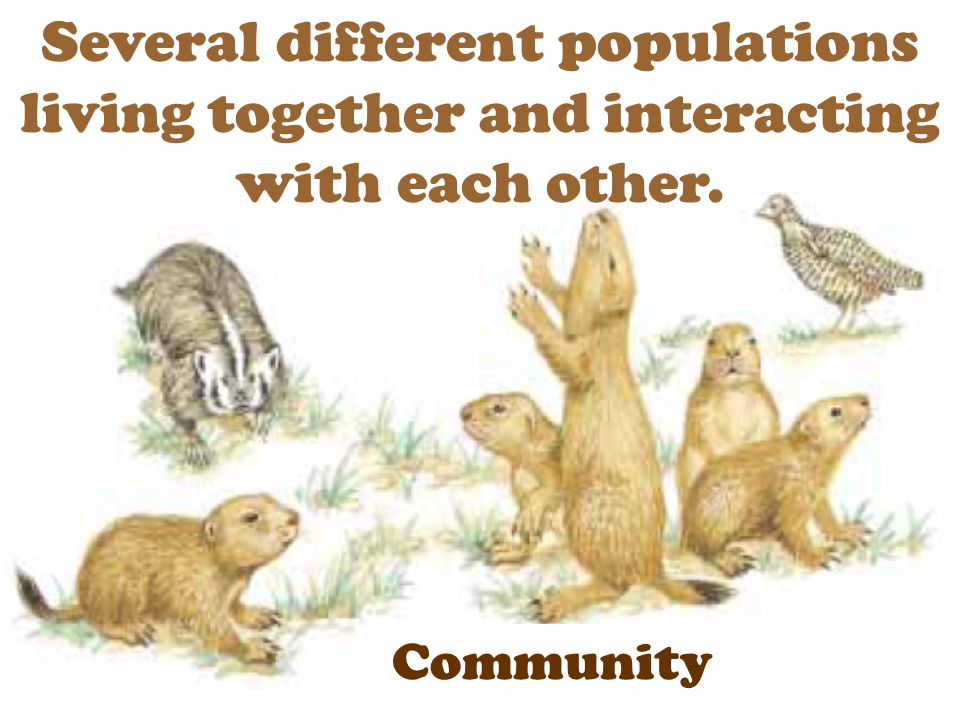 Several different populations living together and interacting with each other. Community