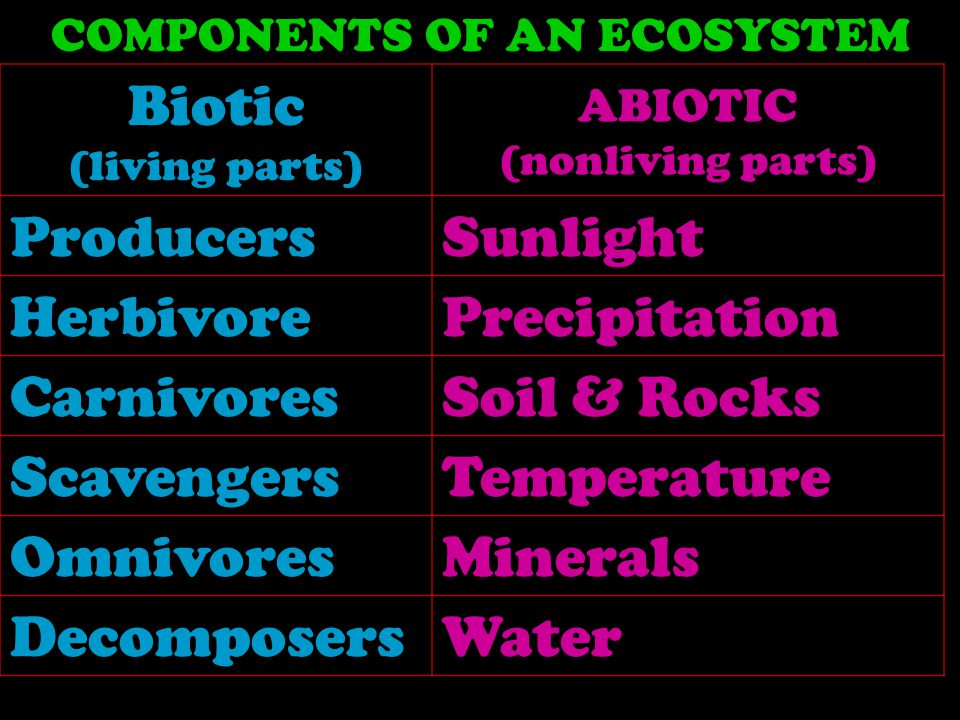 Biotic (living parts) ABIOTIC (nonliving parts) ProducersSunlight HerbivorePrecipitation CarnivoresSoil & Rocks ScavengersTemperature OmnivoresMinerals Decomposers Water COMPONENTS OF AN ECOSYSTEM