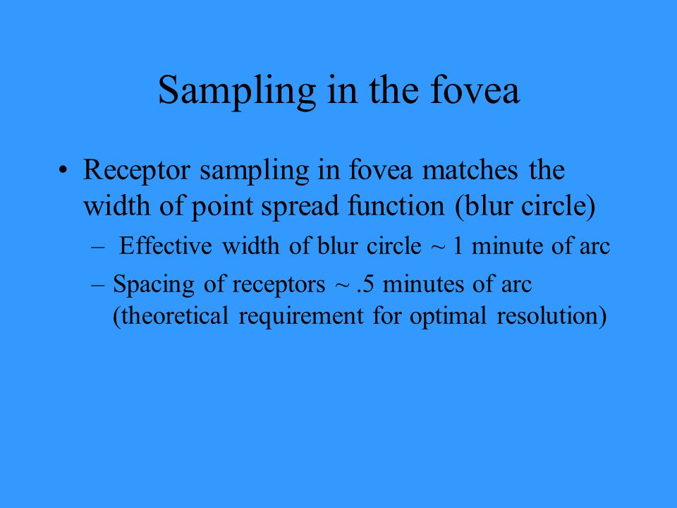 Sampling in the fovea Receptor sampling in fovea matches the width of point spread function (blur circle) – Effective width of blur circle ~ 1 minute