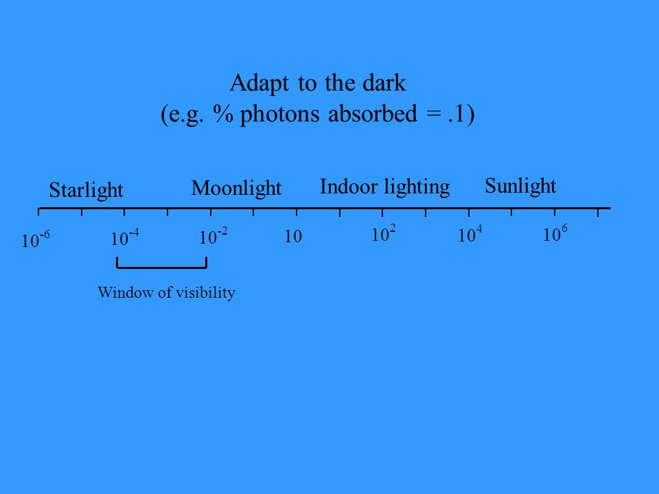 Starlight Moonlight Indoor lighting Sunlight 10 -6 10 -4 10 -2 10 10 2 10 4 10 6 Window of visibility Adapt to the dark (e.g. % photons absorbed =.1)