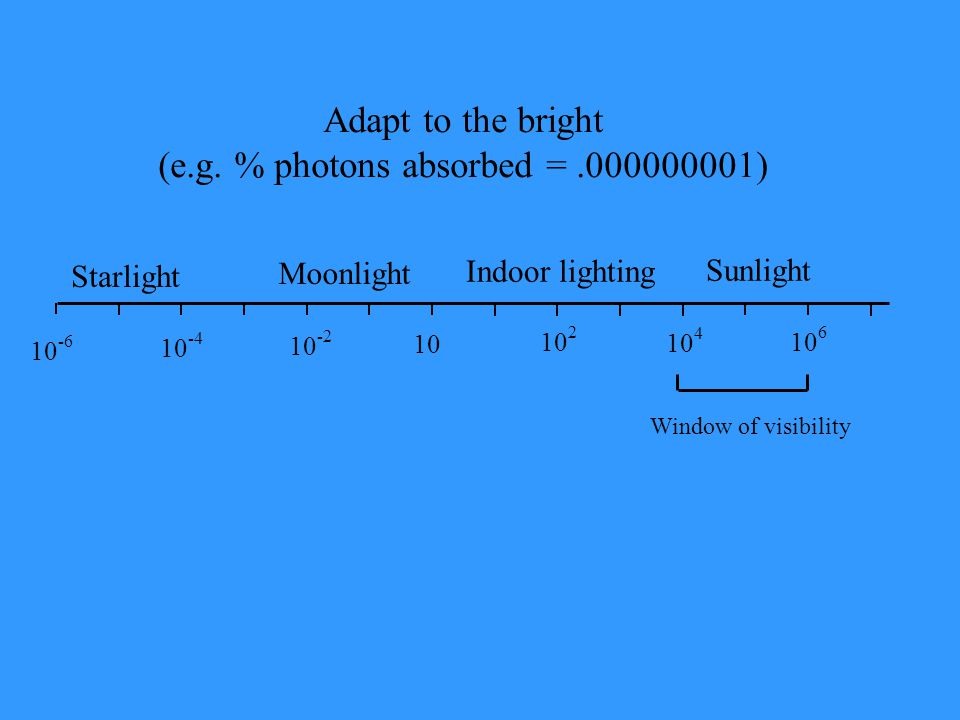 Starlight Moonlight 10 -6 10 -4 10 -2 10 10 2 10 4 10 6 Window of visibility Adapt to the bright (e.g. % photons absorbed =.000000001) Indoor lighting