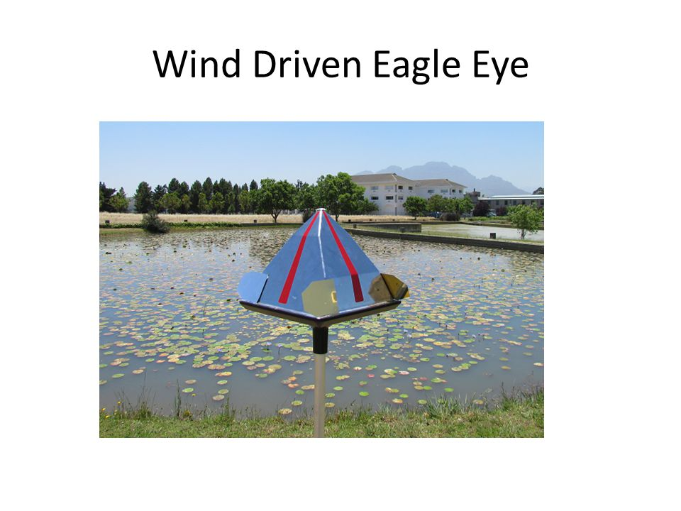Wind Driven Eagle Eye