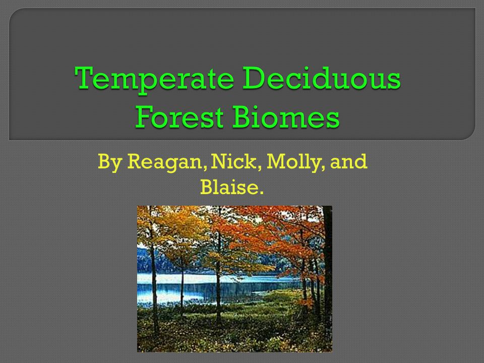 Special Adaptation: beech trees have many leaves to catch sunlight.