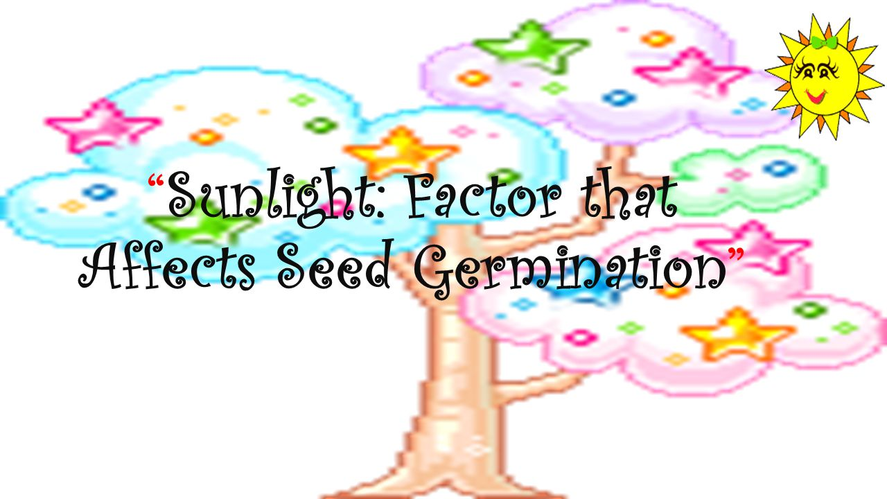 Sunlight: Factor that Affects Seed Germination