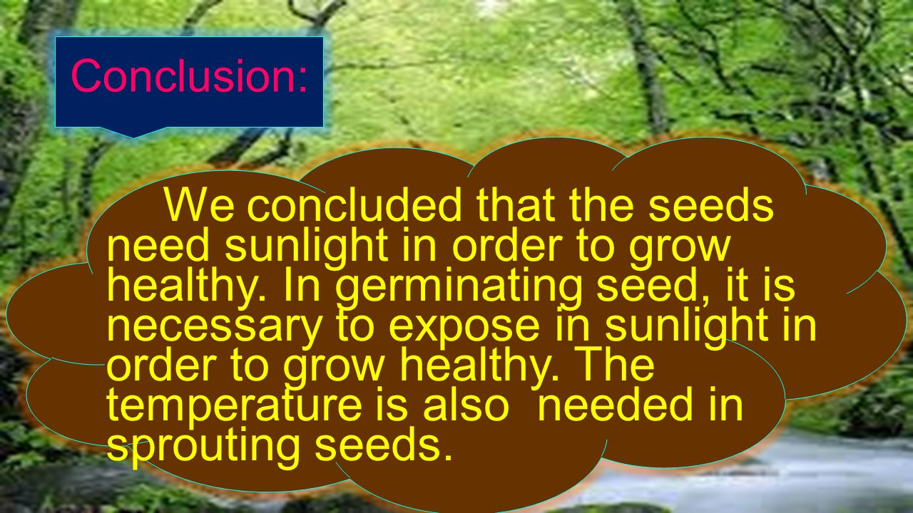 Conclusion: We concluded that the seeds need sunlight in order to grow healthy.