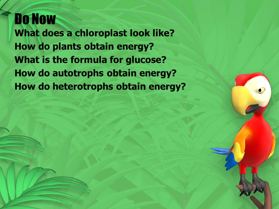 1.Sunlight Autotrophs – can use sunlight to make food – Ex.