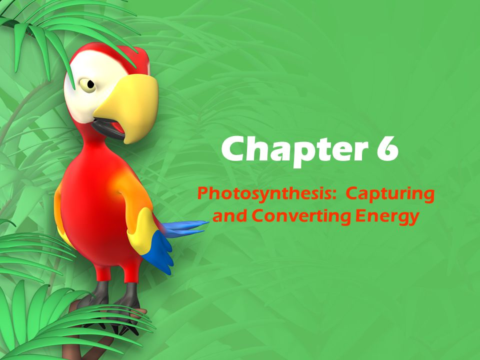 Chapter 6 Photosynthesis: Capturing and Converting Energy