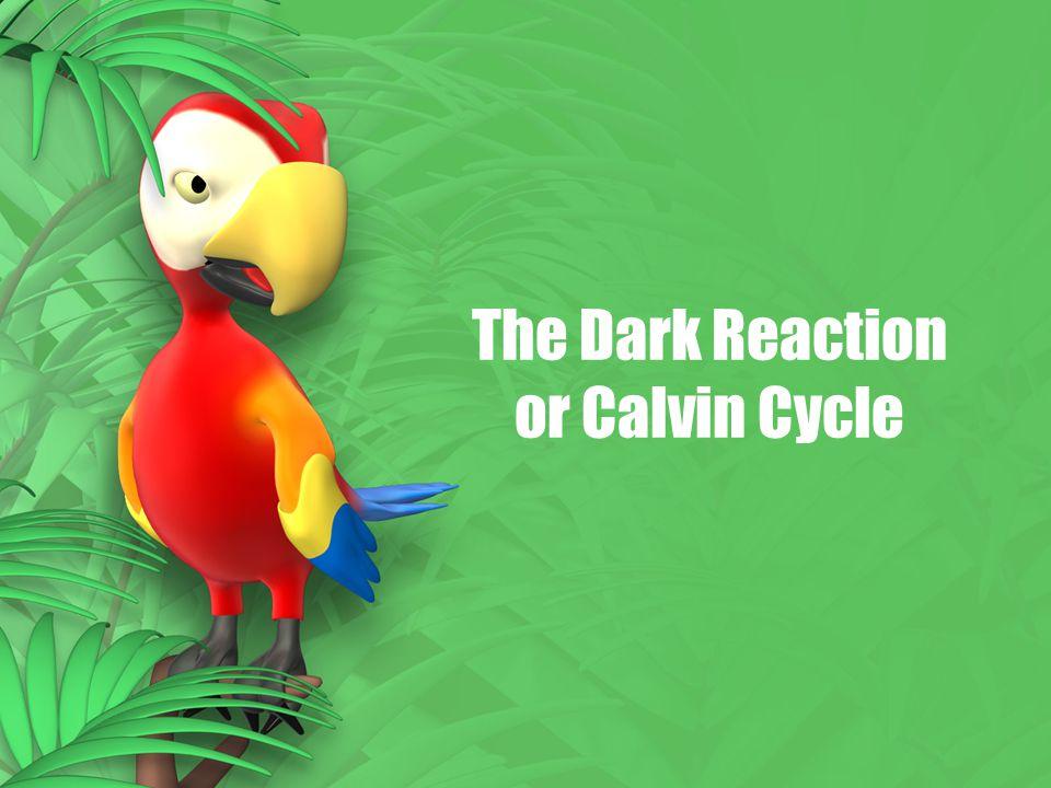 The Dark Reaction or Calvin Cycle