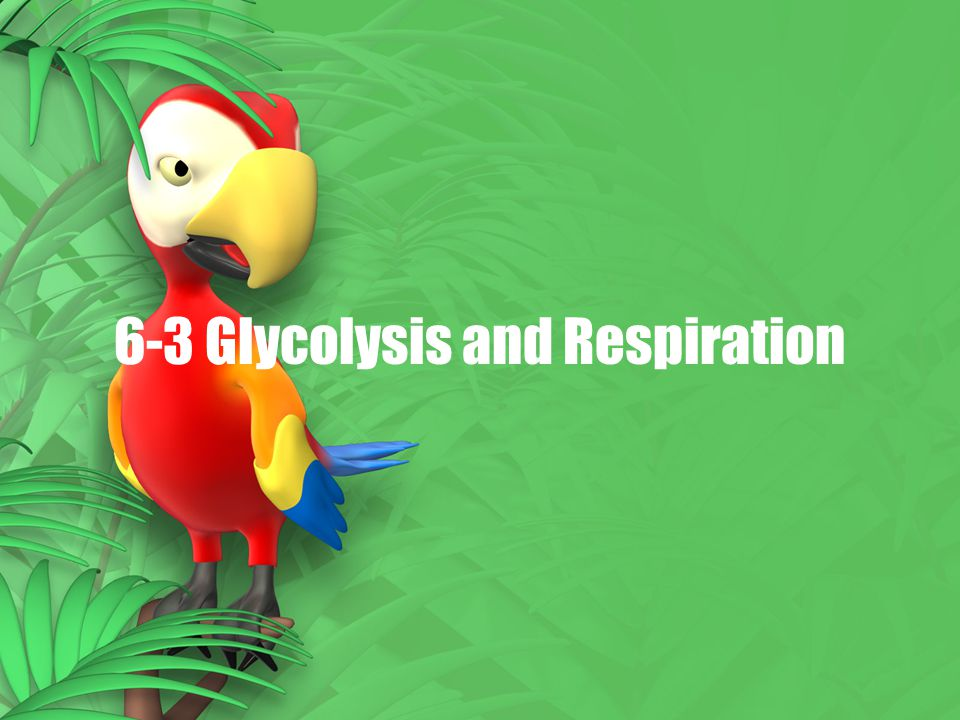 6-3 Glycolysis and Respiration