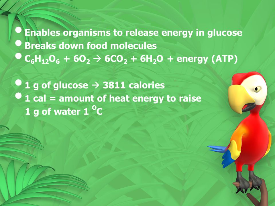 Enables organisms to release energy in glucose Breaks down food molecules C 6 H 12 O 6 + 6O 2  6CO 2 + 6H 2 O + energy (ATP) 1 g of glucose  3811 ca