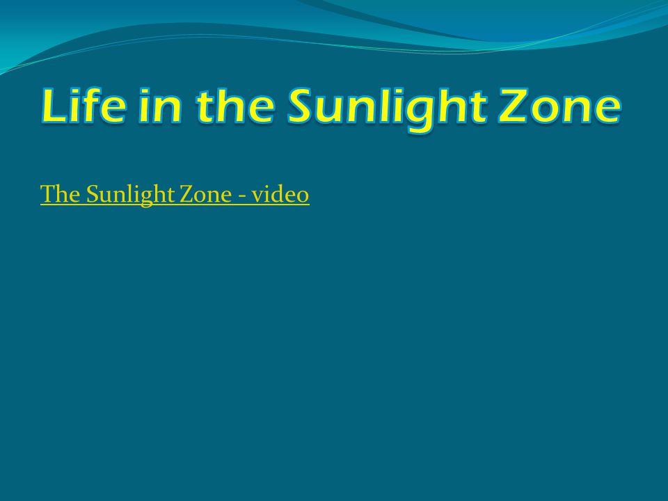 The Sunlight Zone - video