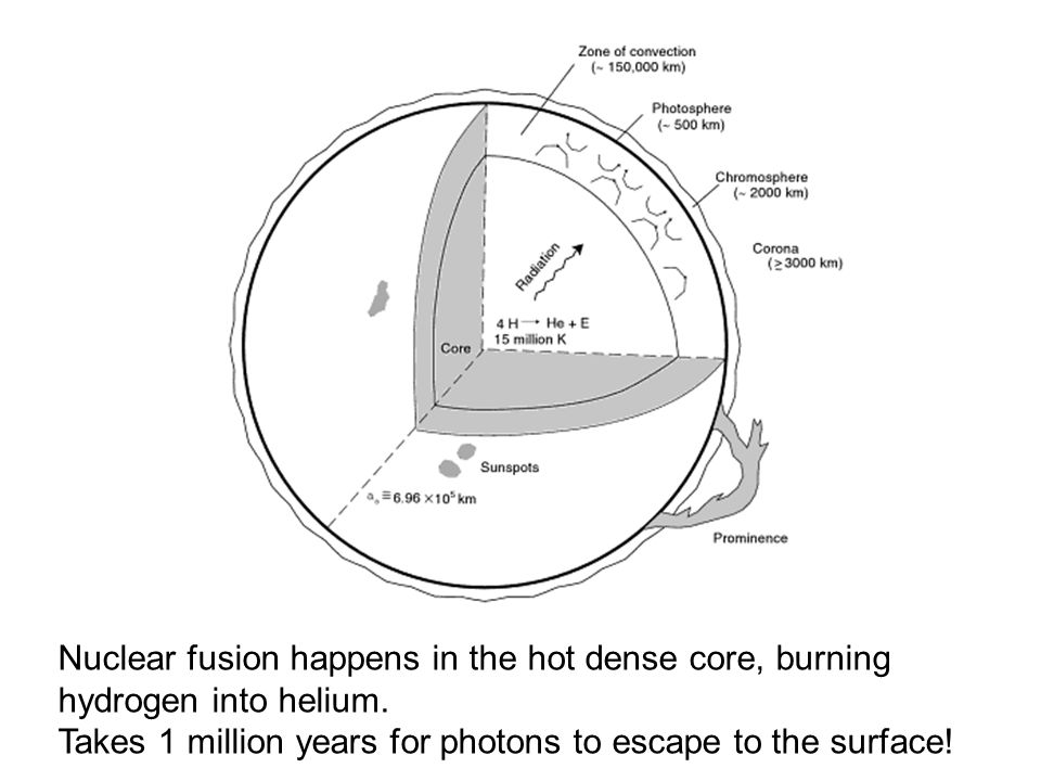 Nuclear fusion happens in the hot dense core, burning hydrogen into helium. Takes 1 million years for photons to escape to the surface!