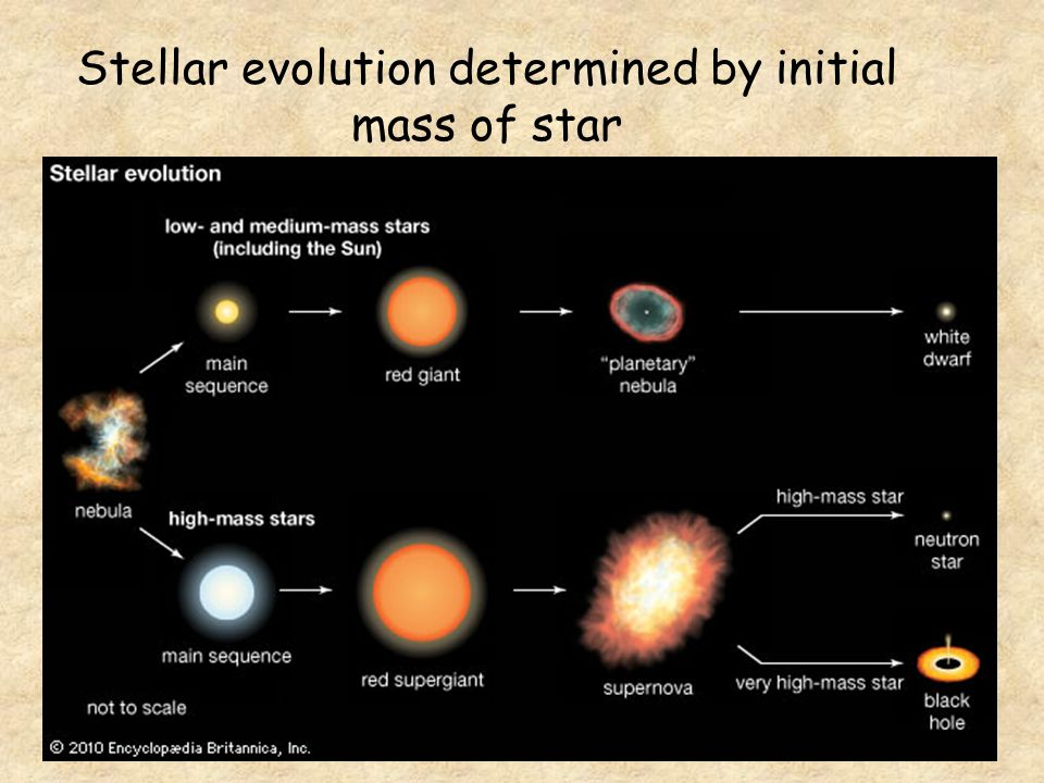 Stellar evolution determined by initial mass of star