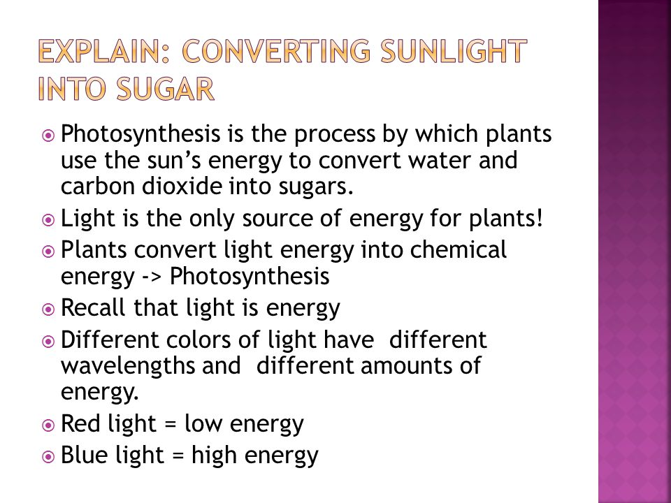  Photosynthesis is the process by which plants use the sun's energy to convert water and carbon dioxide into sugars.