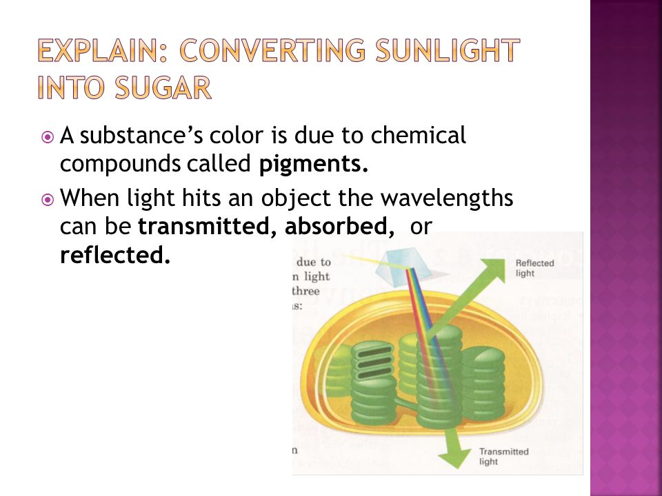  Chloroplasts contain pigments called Chlorophyll a, Chlorophyll b, and Carotenoids.