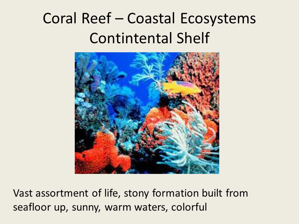 Coral Reef – Coastal Ecosystems Contintental Shelf Vast assortment of life, stony formation built from seafloor up, sunny, warm waters, colorful