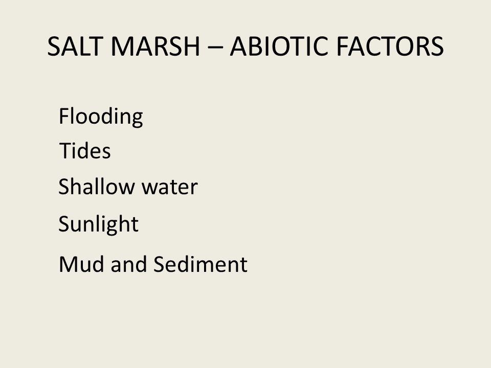 SALT MARSH – ABIOTIC FACTORS Flooding Shallow water Sunlight Mud and Sediment Tides