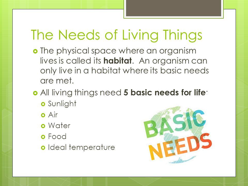 5 Basic Needs for Life  1.