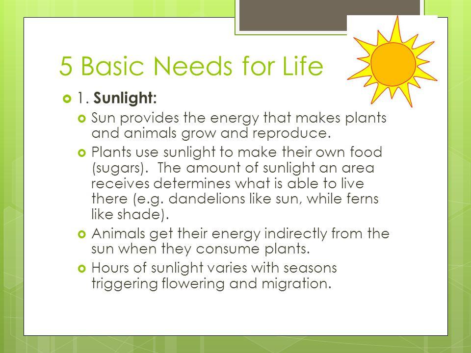 5 Basic Needs for Life  2.