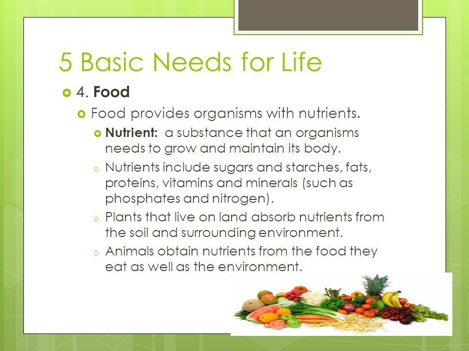 5 Basic Needs for Life  4. Food  Food provides organisms with nutrients.  Nutrient: a substance that an organisms needs to grow and maintain its bo