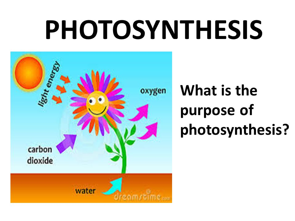 What 3 things do I need to make my flower grow which are the same 3 things (reactants) needed for photosynthesis.