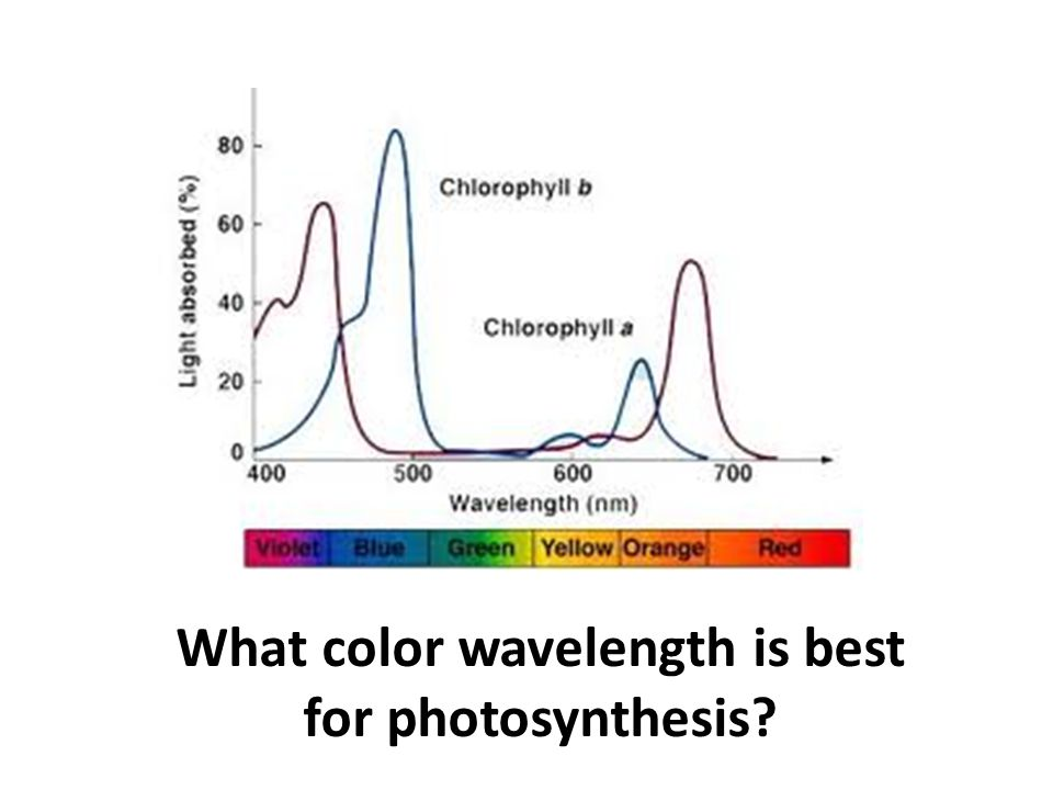 What color wavelength is best for photosynthesis?