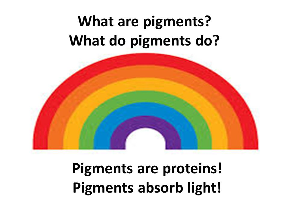 What are pigments? What do pigments do? Pigments are proteins! Pigments absorb light!