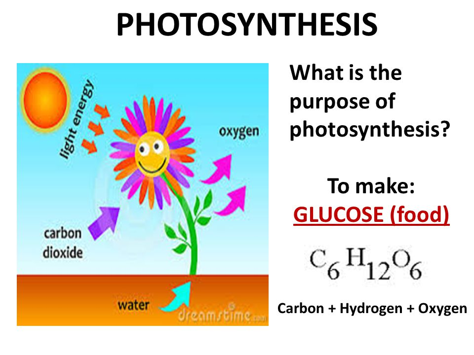 PHOTOSYNTHESIS What is the purpose of photosynthesis? To make: GLUCOSE (food) Carbon + Hydrogen + Oxygen