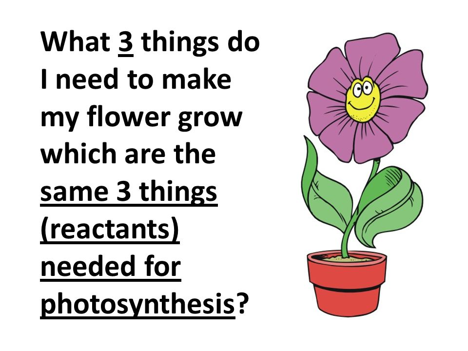 What 3 things do I need to make my flower grow which are the same 3 things (reactants) needed for photosynthesis?