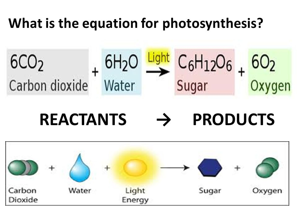 What is the equation for photosynthesis REACTANTS → PRODUCTS