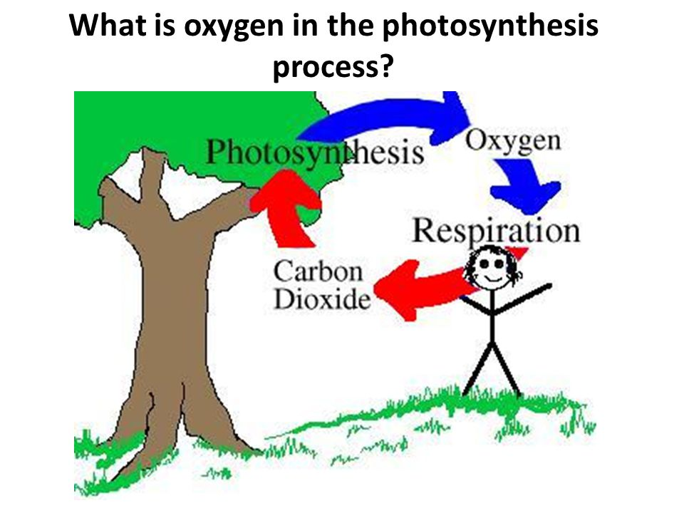 What is oxygen in the photosynthesis process?