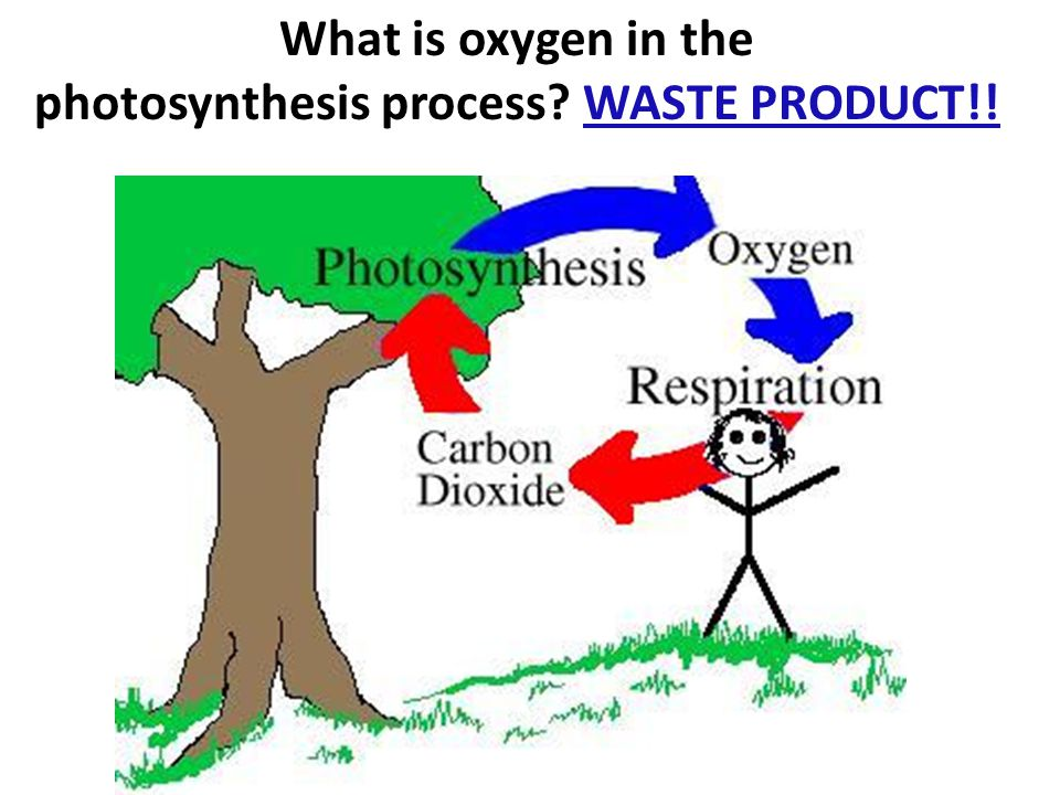 What is oxygen in the photosynthesis process WASTE PRODUCT!!