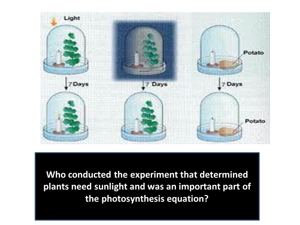 Who conducted the experiment that determined plants need sunlight and was an important part of the photosynthesis equation?