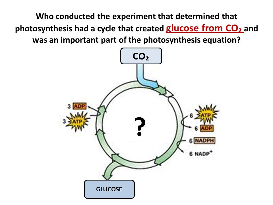 Who conducted the experiment that determined that photosynthesis had a cycle that created glucose from CO₂ and was an important part of the photosynthesis equation.