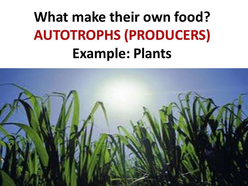 AUTOTROPHS (PRODUCERS) Example: Plants