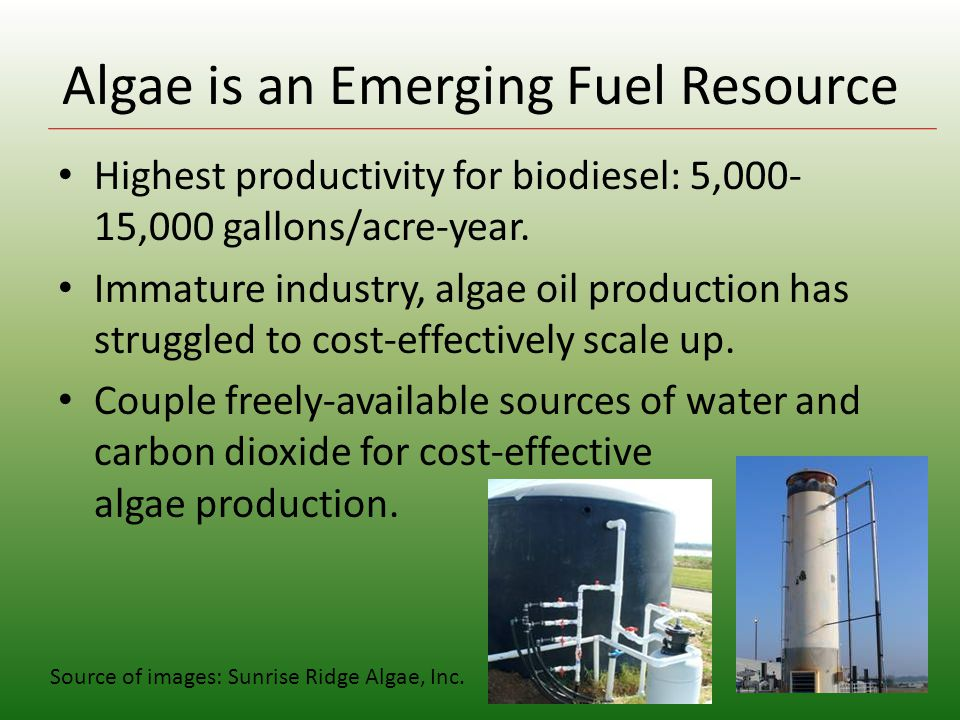 Algae is an Emerging Fuel Resource Highest productivity for biodiesel: 5,000- 15,000 gallons/acre-year.